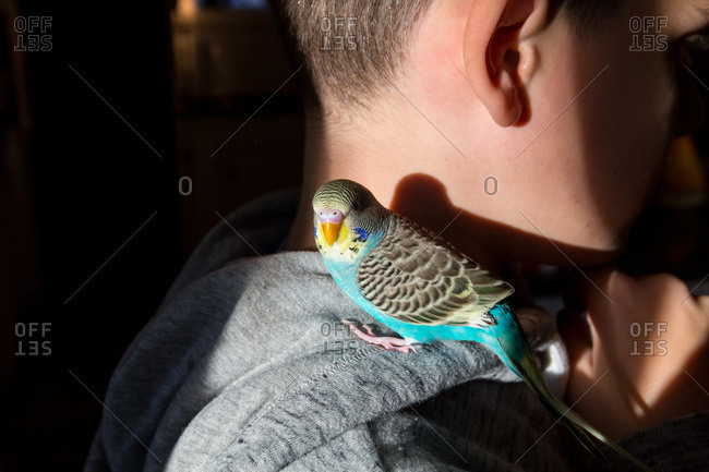 A young boy with pet parakeet perched on his shoulder