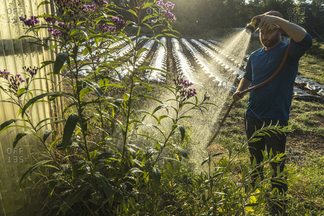 Atlanta, Georgia, USA - September 29, 2016: Love is Love Farm, manager Maxwell Davenport is watering crops. The farm is one of the oldest certified organic farms in Georgia and is leased from Gaia Gardens, a local housing community