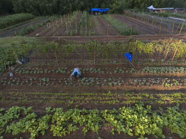 Stone Mountain, Georgia, USA - September 10, 2016: Global Growers Farm in Stone Mountain, GA. There are refugees from Myanmar that use plots provided by Global Growers