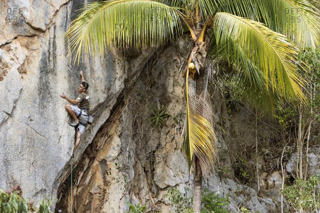 Vinales, Cuba - February 8, 2017: A local Cuban climber rope climbs up a cliff in Vinales, Cuba