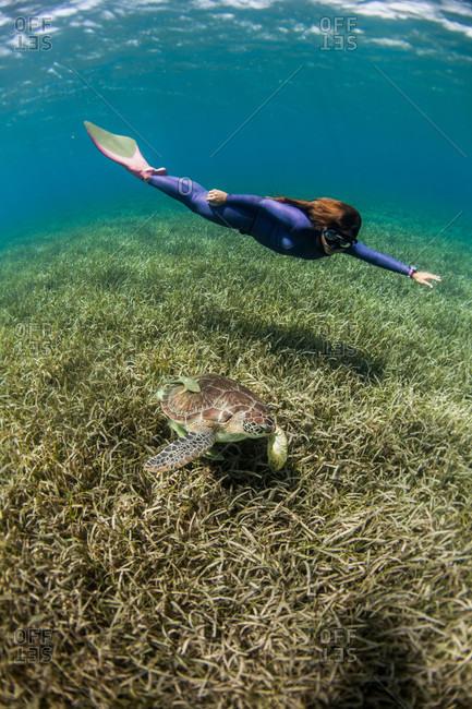 West End, West Bay, Roatan, Honduras - May 30, 2013: Woman free diving with turtle underwater, West End, West Bay, Roatan, Honduras
