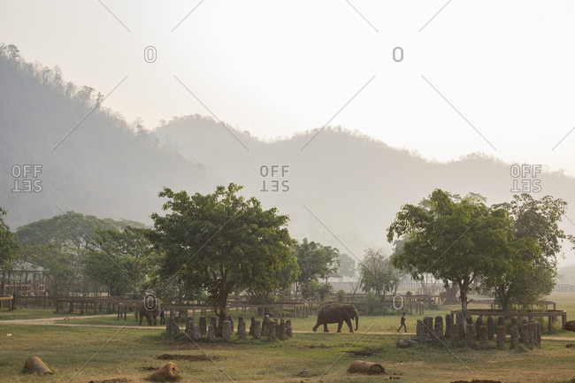 Chiang Mai, Chiang Mai, Thailand - March 23, 2017: Elephants and mahouts crossing park to get morning drink from river