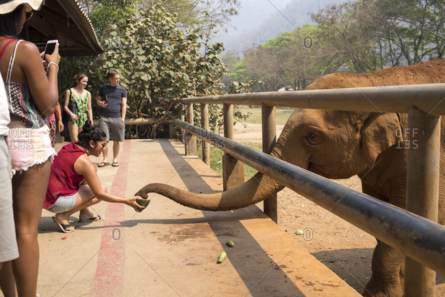 Feeding time at the park, Feeding time at the park, Thailand - March 22, 2017: Elephant's trunk reaches for the fruit in a woman's hand at the park. All the visitor have an opportunity to feed the elephants