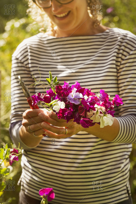 Close up of woman standing in a garden, holding bunch of pink sweet peas.