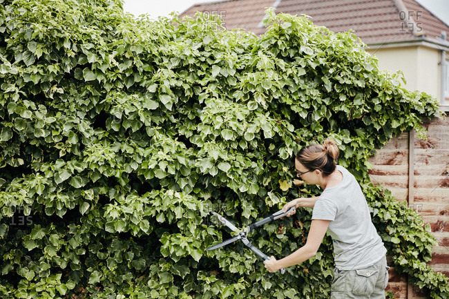 A woman using shears to cut back a climbing plant growing up over a fence.
