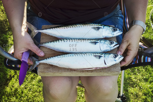 Three fresh mackerel fish on a wooden board, being prepared for cooking.