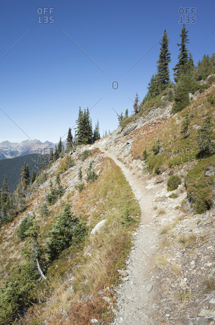 Pacific Crest Trail through alpine meadow, near Harts Pass, Pasayten Wilderness, Washington.