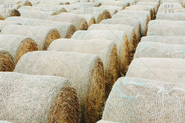 Wrapped round hay bales in neat rows on the prairie in Montana.