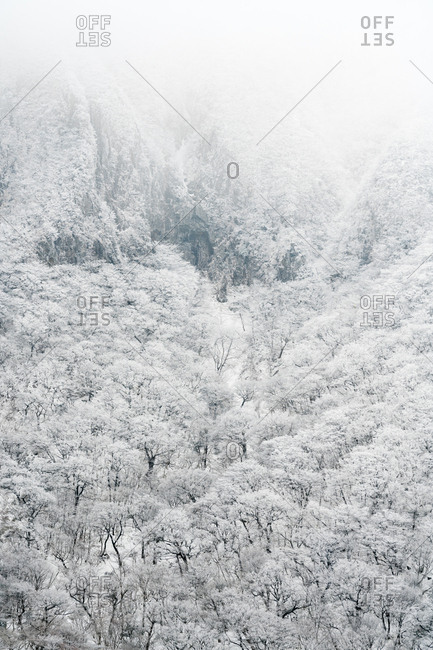 Snow covered forest of Hallasan on Jeju Island