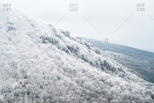 Snow covered forest on the slopes of Hallasan on Jeju Island
