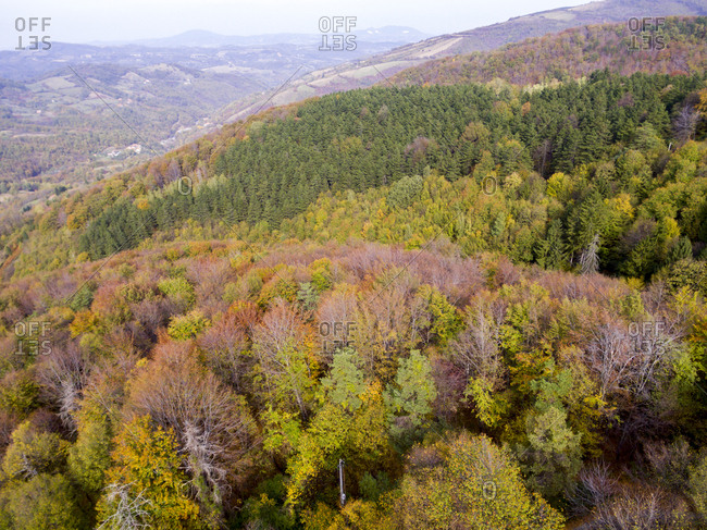 Mountain forest in autumn from above