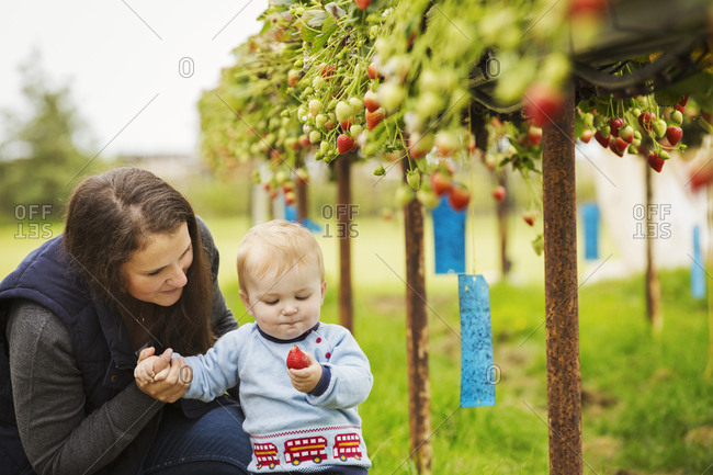 A mother and baby boy picking strawberries from plants grown on raised platforms in a polytunnel