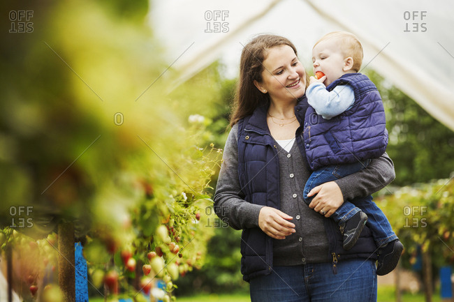 An adult woman and a toddler, mother and son in a polytunnel among soft fruit bushes picking and tasting autumn raspberries