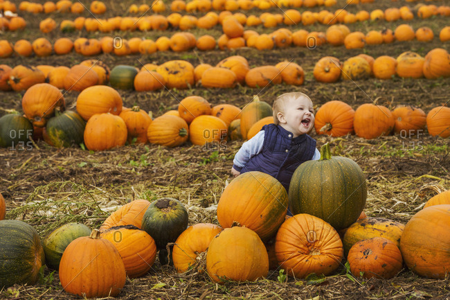 A small boy sitting among rows of bright yellow, green and orange pumpkins in a field, laughing