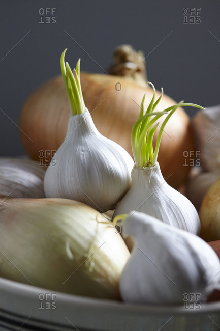 Close up of a bowl of onions and sprouted garlic bulbs