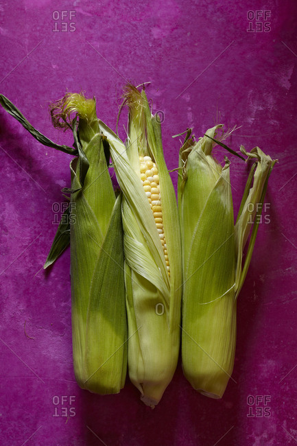 Three fresh corn husks on a fuchsia background