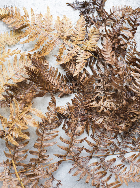 Dried fern fronds on light surface