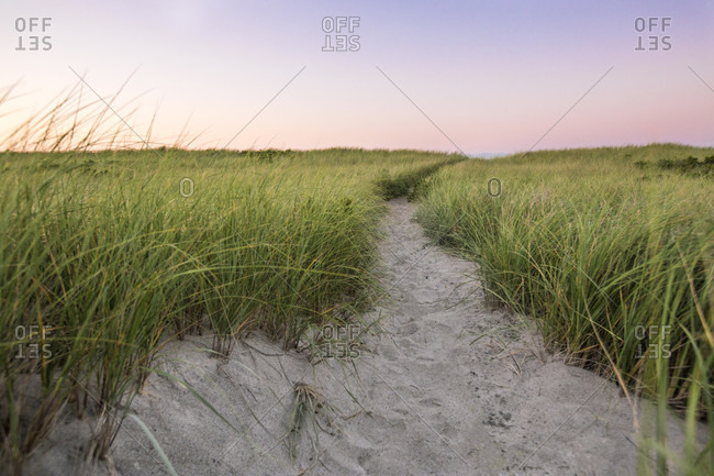 A small path leading to the Atlantic Ocean cuts through a field of sand dune grass at sunrise on Napatree Point in Watch Hill, Westerly, Rhode Island.