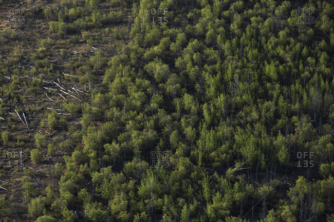 Overhead view of a forest scene in Kluane National Park in Canada's Yukon showing a split of untouched and logged forest.