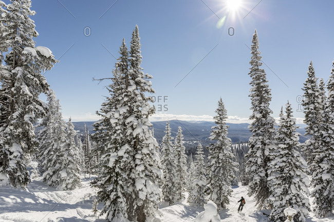 Sun shining over skier sliding between snowcapped trees, Steamboat Springs, Colorado, USA