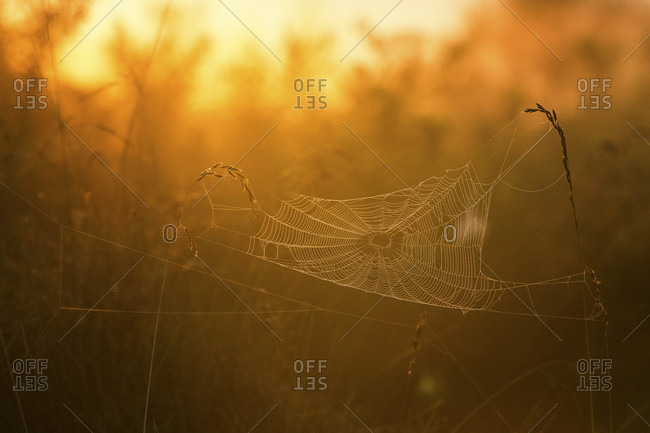 Tranquil scene with spider web in meadow at sunrise, Princeton, New Jersey, USA