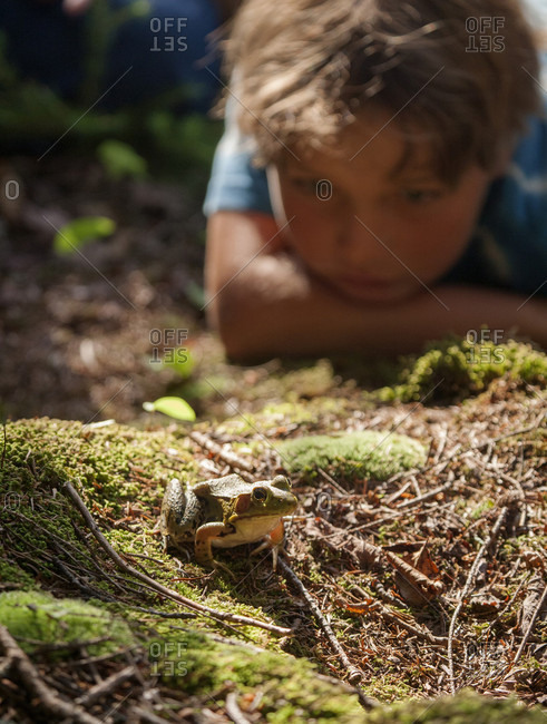 [various]An eight-year-old boy examines a Green Frog while camping in the White Mountain National Forest of New Hampshire.