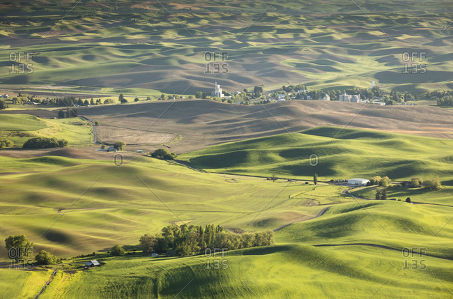 Scenic view of rolling hills in Palouse region, Garfield, Washington State, USA
