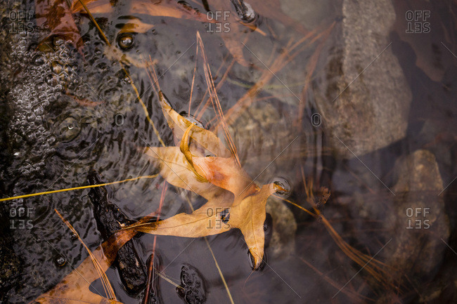 Fallen leaves in a stream