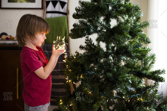 Young boy unravels string of lights to decorate Christmas tree
