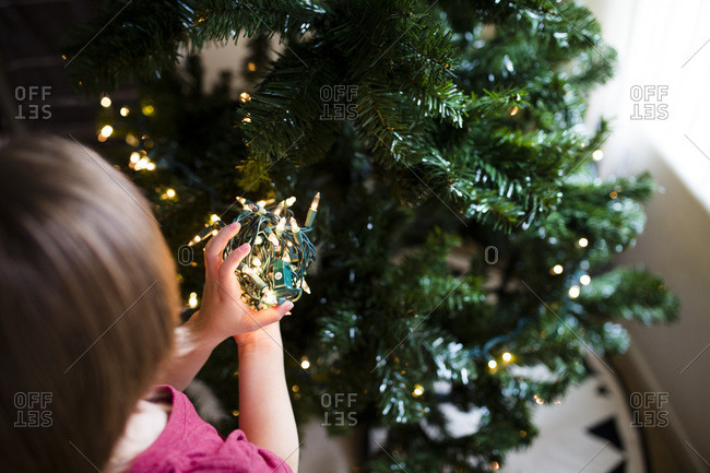 Young child unravels string of lights to decorate Christmas tree