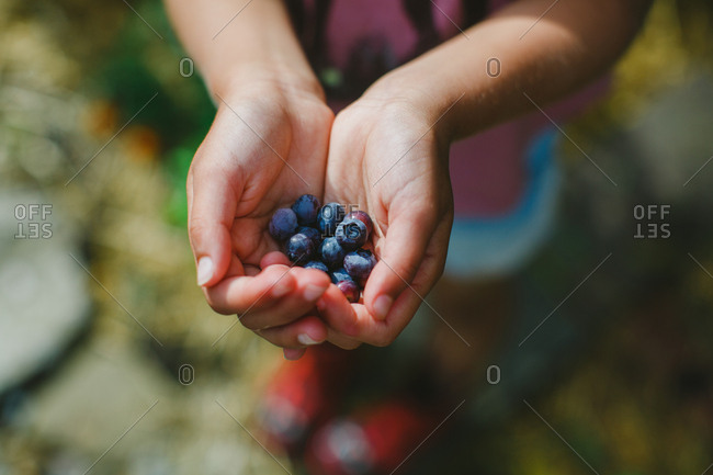 Young person cups handful of blueberries outside