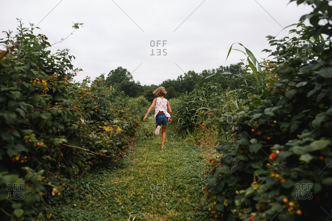 Young girl runs away down a path between raspberry bushes full of fruit