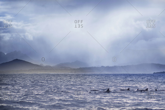 Scenic view of dolphins at Indian Ocean