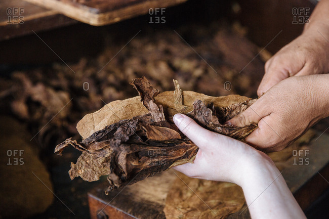 Woman receives a handful of tobacco leaves