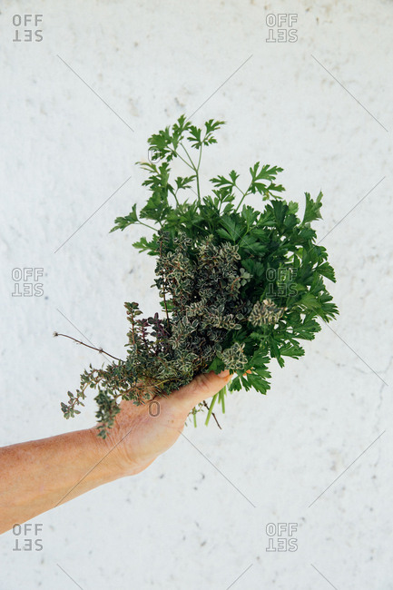 Person holding a bunch of fresh herbs