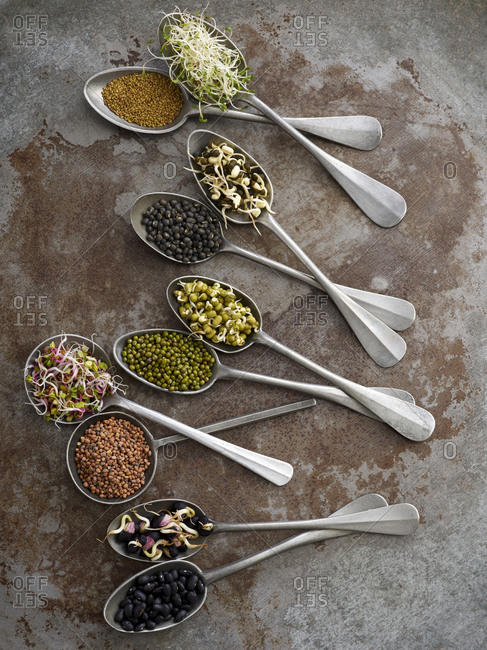 Sprouting beans on spoons - Offset