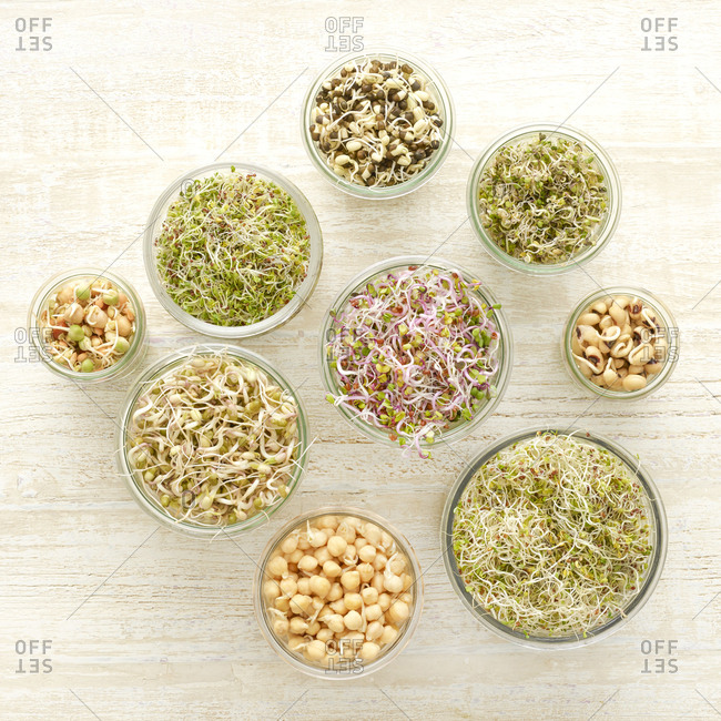 Sprouting beans in jars