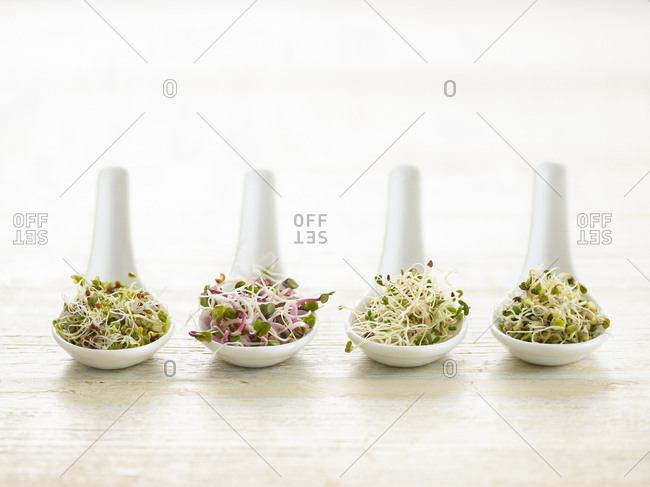 Sprouting beans on ceramic spoons