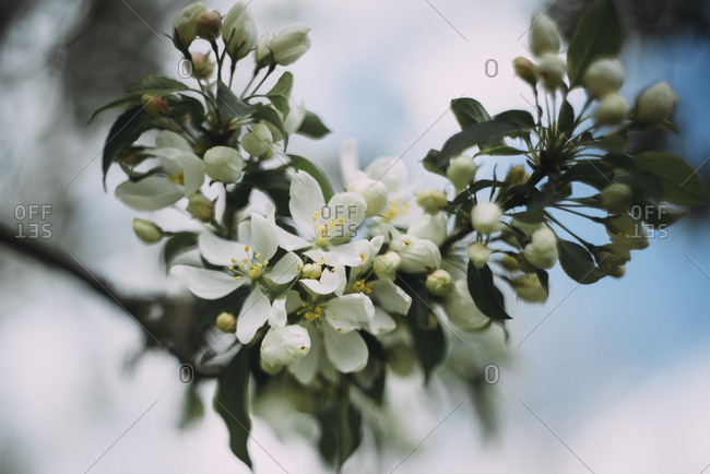 Close-up of blossom flowers blooming on tree