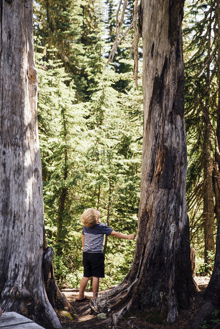 Rear view of boy standing by tree in forest