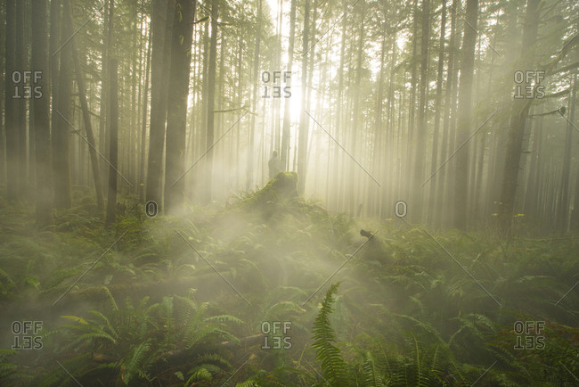 Scenic view of trees and plants growing at North Cascades National Park during foggy weather