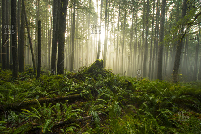 Scenic view of trees and plants growing at North Cascades National Park