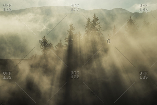 Low angle view of trees growing forest during foggy weather