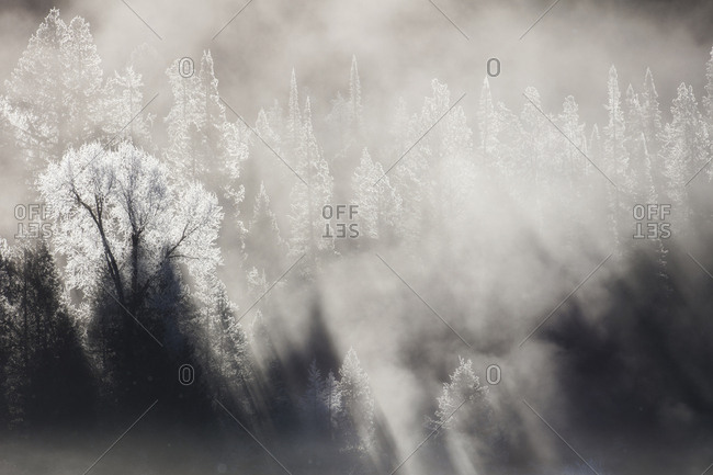 Winter mist is in a forest