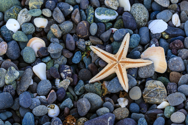 Sea star on colorful beach rocks