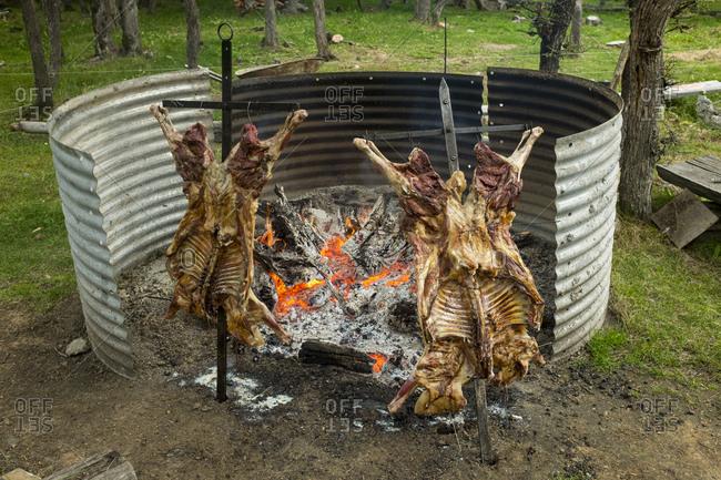 Asado al palo, roast lamb, cooks nailed to a stick over open coals