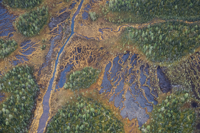 Aerial view of string bogs and coniferous forest in autumn