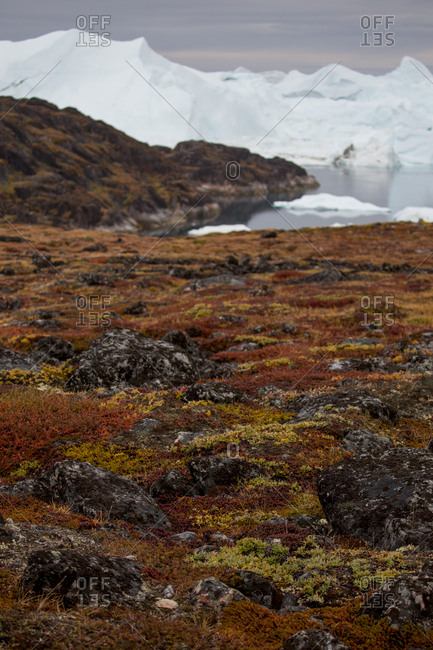 Greenlandic tundra landscape with icebergs in the background