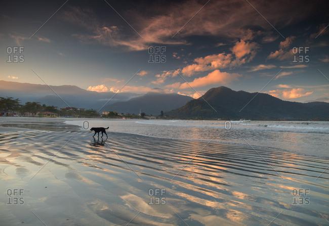 A stray dog walks across Pereque-acu Beach at sunset