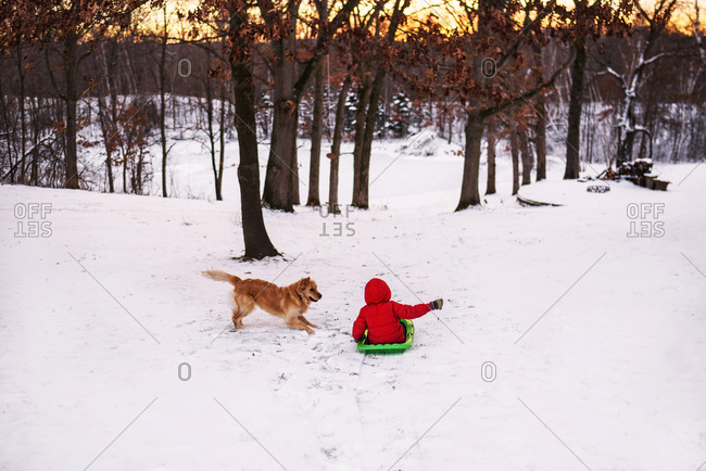 Child playing in the snow on a sled with a dog